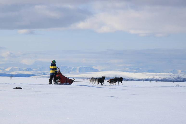 28Trine med hundespannet på Finnmarksvidda
